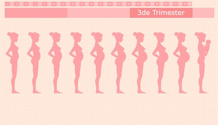 Derde trimester van je zwangerschap