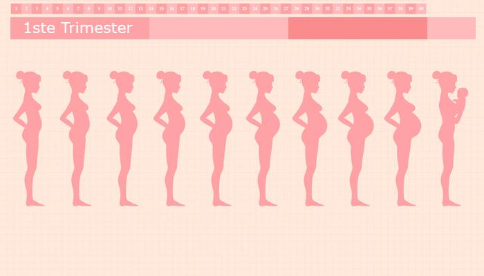 Eerste trimester van je zwangerschap