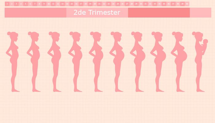 Tweede trimester van je zwangerschap