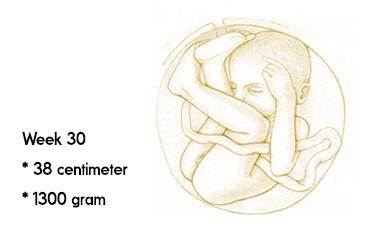 30 weken zwanger afmeting en gewicht
