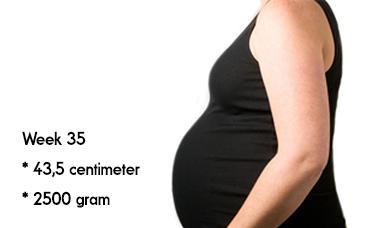 35 weken zwanger afmeting en gewicht
